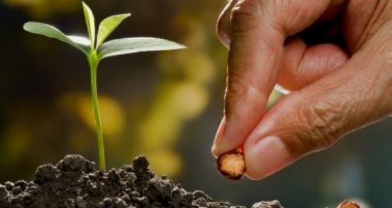 """15º Domingo do tempo comum: """"A semente, a Palavra"""""""